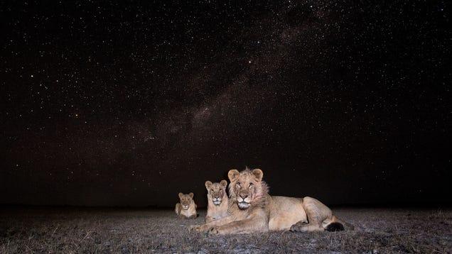 13 Sensational Camera Trap Photos of African Animals At Night