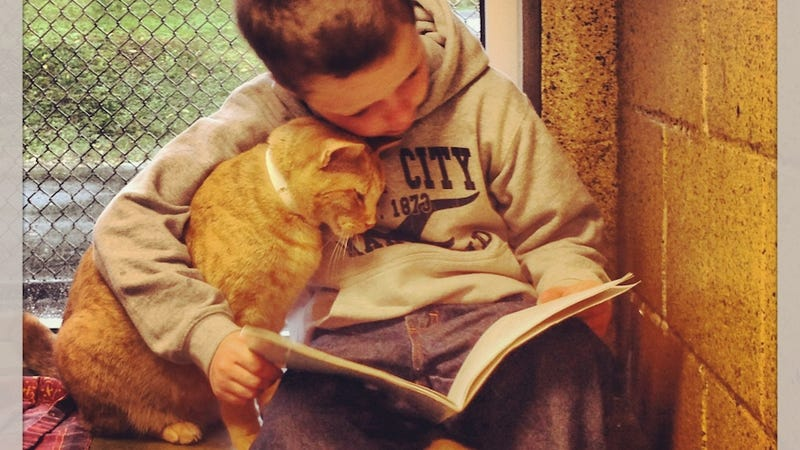 Illustration for article titled Kids Reading to Shelter Cats Will Destroy You