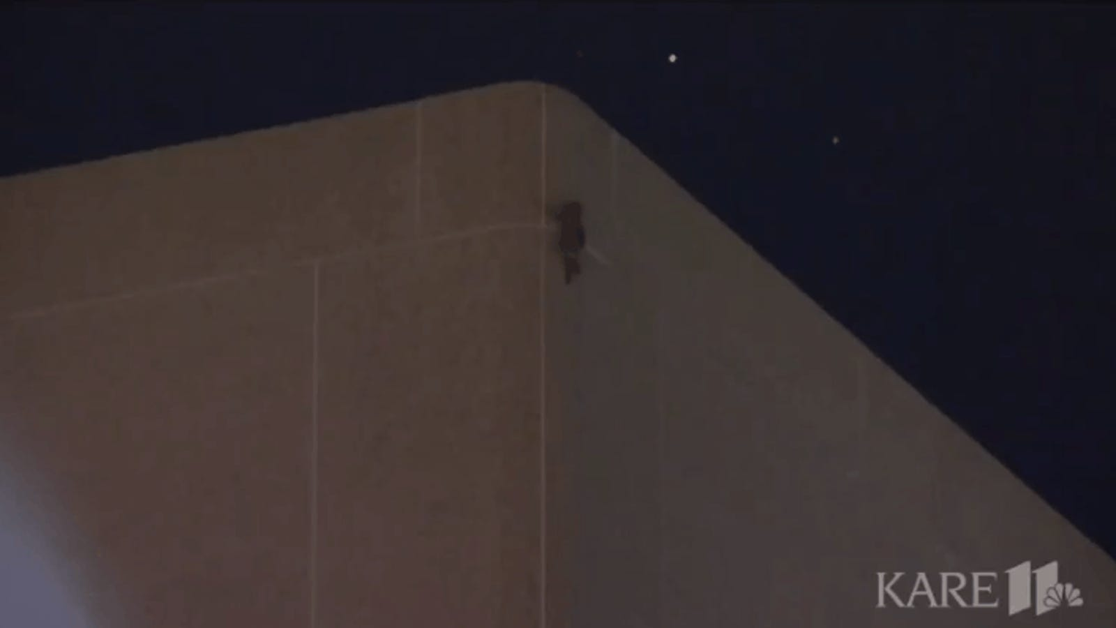 MPR Raccoon Reaches Roof After Climbing 23-Story Office Building, Becoming Internet Sensation