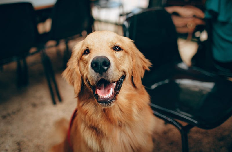 Illustration for article titled La manera correcta de acercarse a un perro que no conoces para acariciarlo, según los veterinarios