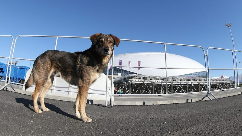 Illustration for article titled Stray Dogs in Sochi Reportedly Being Killed Ahead of Olympic Games