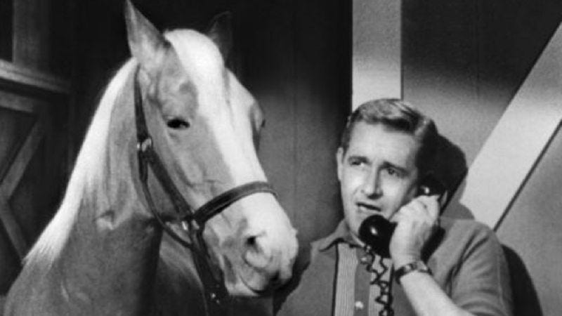 Illustration for article titled Mister Ed will be a movie now, of course, of course