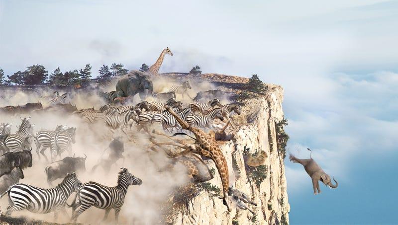 Illustration for article titled Lions, Zebras, Giraffes Run Off Cliff Shrieking En Masse As Shadow Of Melania Trump's Jet Passes Over Savanna