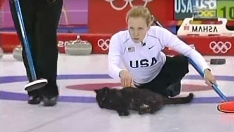 All hail the greatest Olympic sport: Cat curling