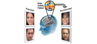 Illustration for article titled Scientists Can Reconstruct Faces by Reading Your Mind