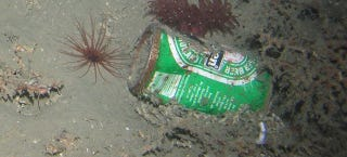 There 39 s garbage in the deepest most remote parts of the ocean for Ocean floor description