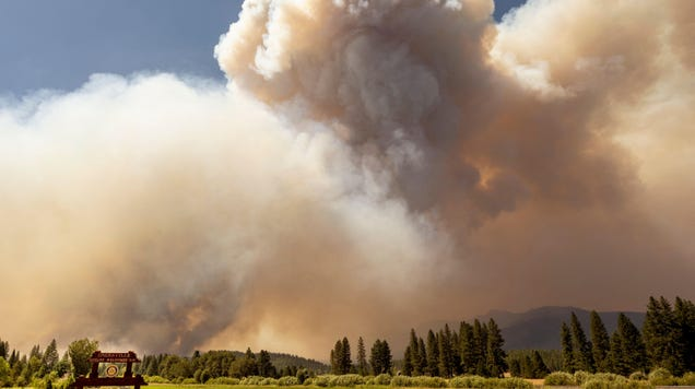 Exposure to Wildfire Smoke May Increase Risk of Dying from Covid-19