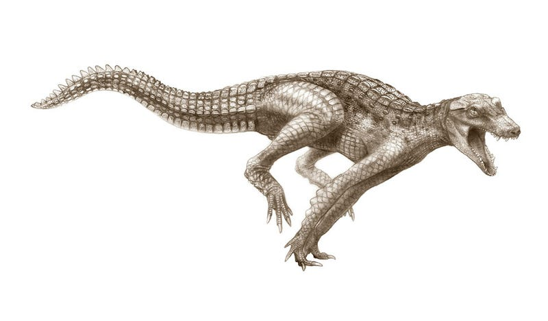 Illustration for article titled Dinosaur-Chomping Supercrocs Ruled the Sahara