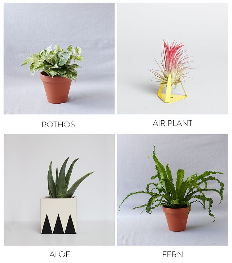 Air Purifying Plants For Bathroom: The Best Plants To Bring Life To Your Bathroom
