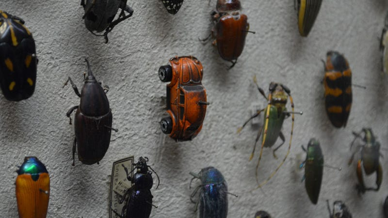 Illustration for article titled Some Sneaky Museum Curator Hid A Volkswagen Beetle In The Insect Collection