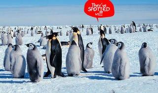 Illustration for article titled Penguin Poo, Spotted by Satellite, Reveals Location of Secret Penguin Base