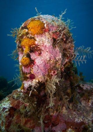 Illustration for article titled Anthropocene Art, the Underwater Show