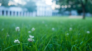 Replace Your Water-Wasting Lawn With These Alternatives