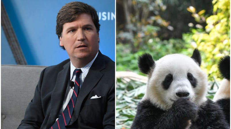 Illustration for article titled Tucker Carlson is here to remind America of the real threat: angry, sexy panda bears