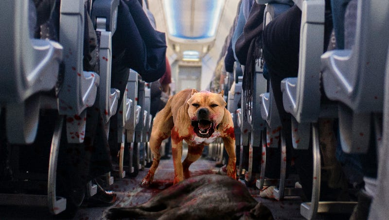 Illustration for article titled United Airlines Updates Policy On Allowing Dogfights In Passenger Cabin