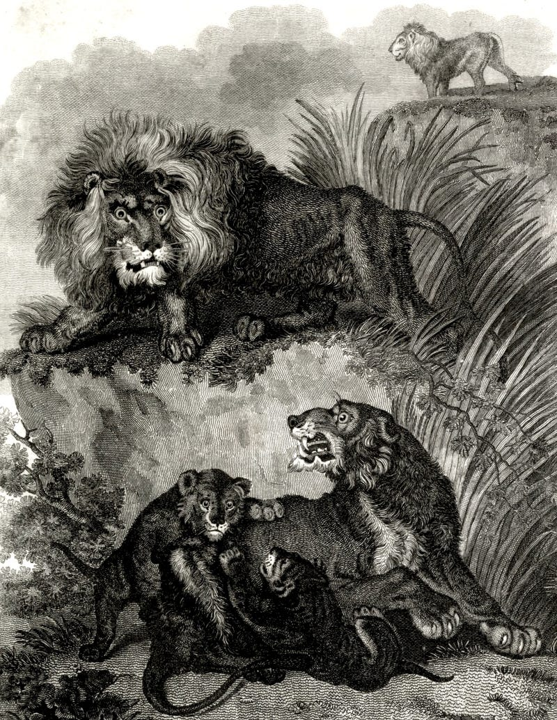 how europeans imagined exotic animals centuries ago based on hearsay