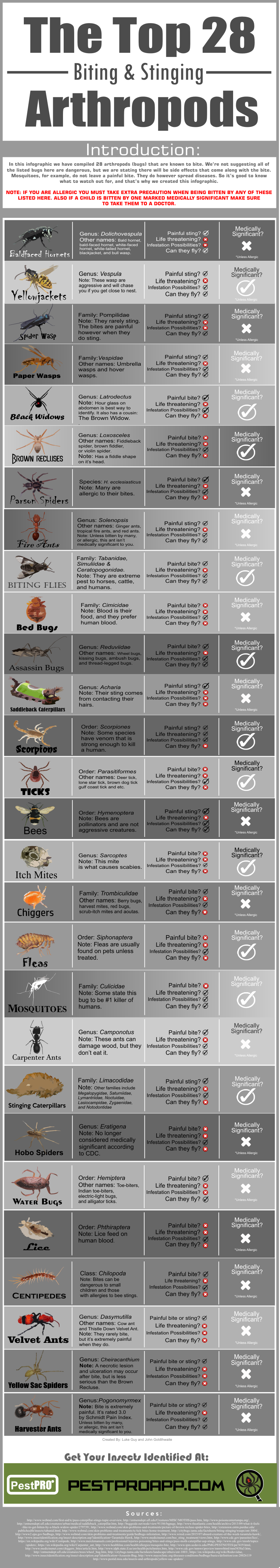 A Visual Guide to the Most Common Biting and Stinging Bugs