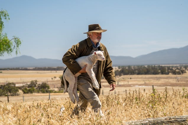 Sibling rivalry and diseased sheep drive the sentimental Sam Neill drama Rams