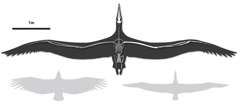Illustration for article titled World's largest flying bird was as big as some aircraft