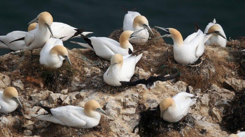 Illustration for article titled Climate Change Is Making Birds Sluttier