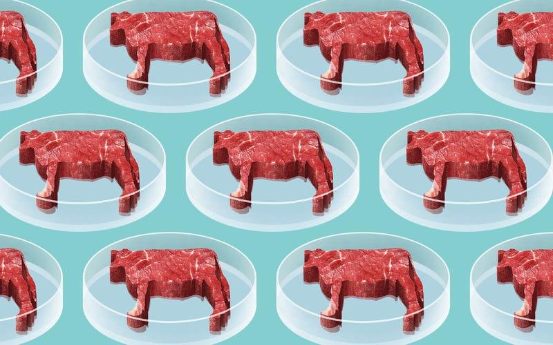 """Résultat de recherche d'images pour """"zero hunger cultured meat"""""""