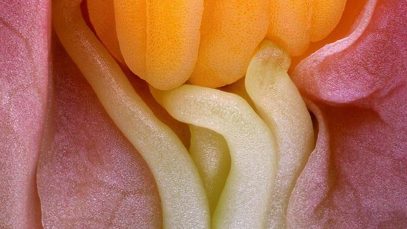 Illustration for article titled Monstruos diminutos: las 10 mejores imágenes microscópicas del año