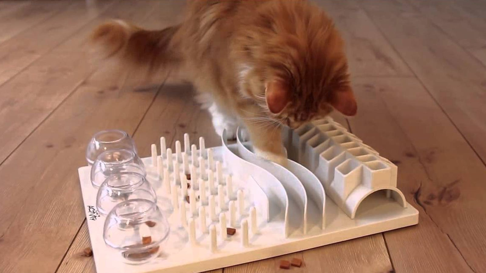 Cats Are Happier and Healthier When You Make Them Work for Their Food