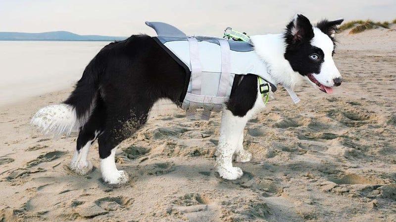 Cutypet Shark Dog Life Jacket, Medium | $20 | Amazon