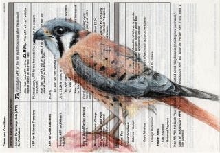 Illustration for article titled The falcon who came folded into your bank statements
