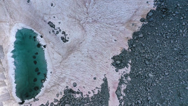 Pink Snow in the Italian Alps Is a Cute Sign of Environmental Catastrophe