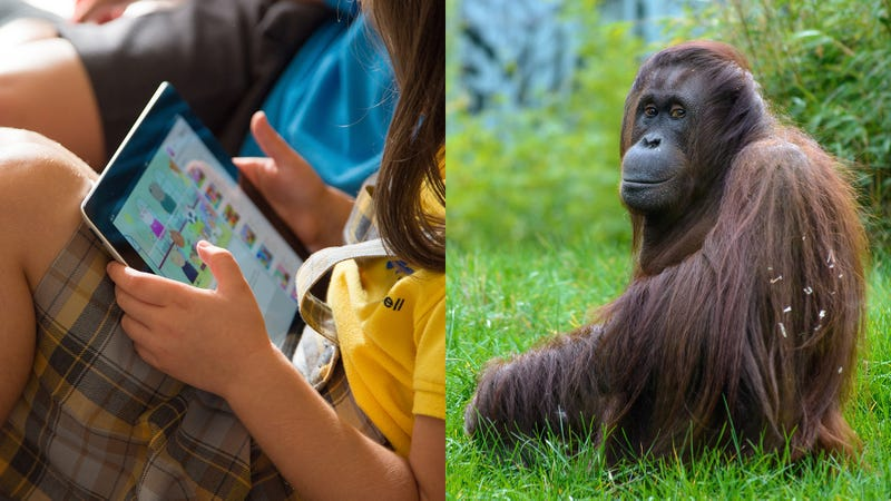 Illustration for article titled Put Down The iPad And Go Shave An Ape! 6 Awesome Things '90s Kids Grew Up Doing To Orangutans That Kids Today Are Totally Missing Out On