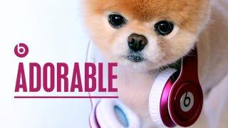 Illustration for article titled Internet's Cutest Dog Endorses World's Dumbest Headphones