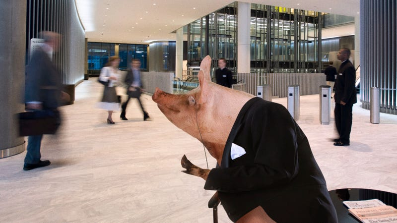 Illustration for article titled Market Frenzy: Apple Stocks Have Skyrocketed After News Broke That The Business Pig Was Walking Around The Company's Office