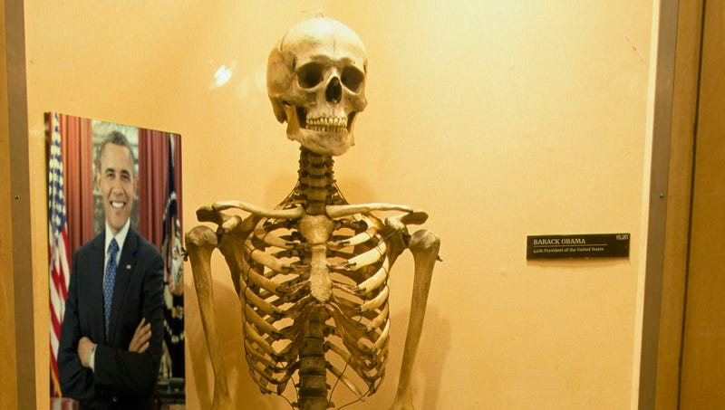Illustration for article titled Historic Exhibit: Barack Obama's Bones Are On Display At The Smithsonian
