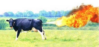 Illustration for article titled Scientists Discover How to Neutralize Cow Farts; Your Farts Next, God Willing