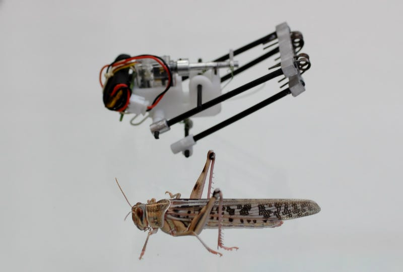 Illustration for article titled This Locust Robot Jumps 11 Feet High and Could Scour Disaster Zones