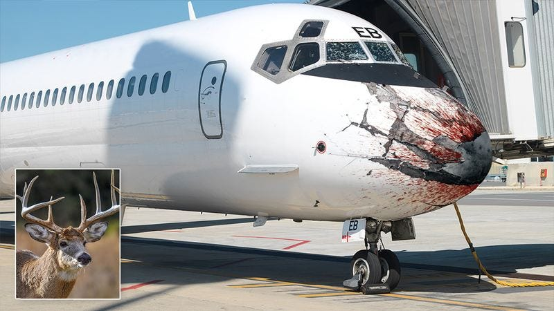 A plane that hit a deer.