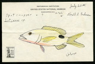 Illustration for article titled Take a Look at a 1948 Scientist's Fish Drawings