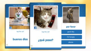 Illustration for article titled CatAcademy Teaches You a Foreign Language with Funny Cat Photos