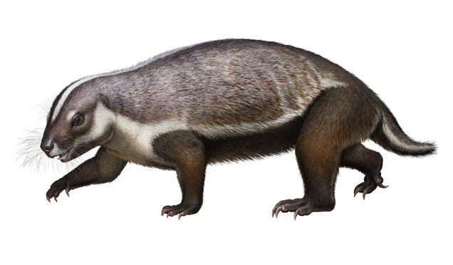 Crazy Beast  Fossil Discovered in Madagascar Reveals Bizarre Mammal From the Cretaceous