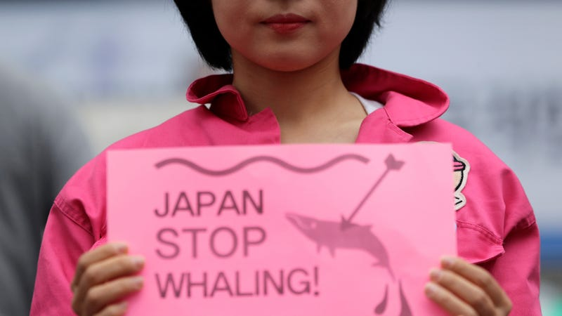 A member of civic group holds a sign during a rally against Japan's commercial whaling near the Japanese embassy in Seoul, South Korea, Wednesday, June 19, 2019.