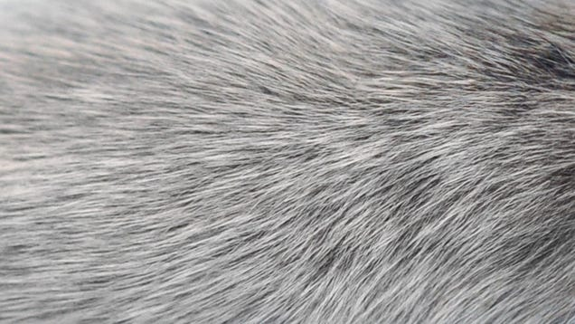 Scientists Find Another Possible Explanation for Why Hair Goes Gray