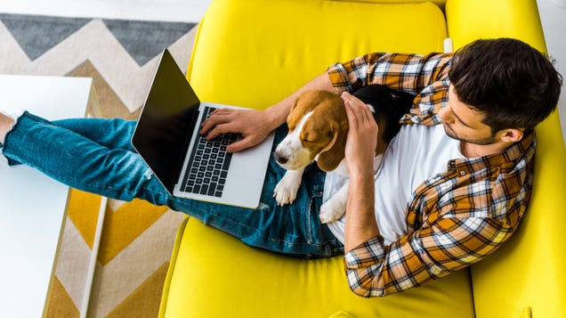 Check Out These Careers You Didn t Know You Could Do Remotely