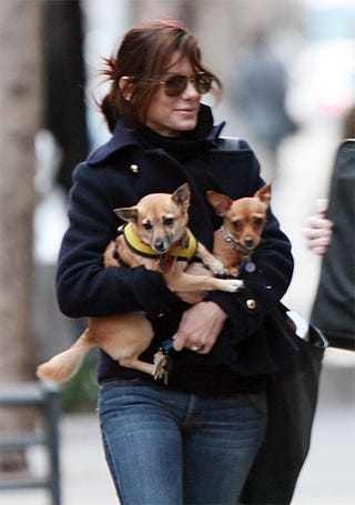 Illustration for article titled Sandra Bullock's Pups Are Too Precious To Walk Themselves