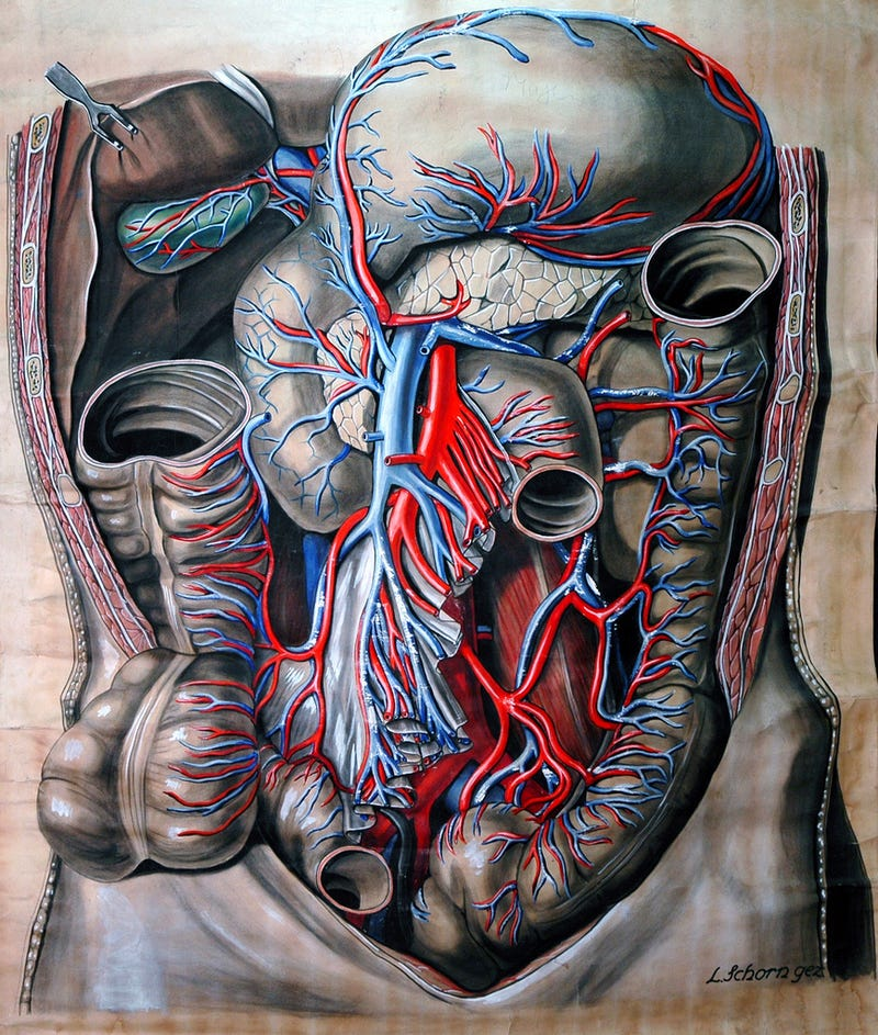 Illustration for article titled Who knew an illustration of an abdominal cavity could be so beautiful?