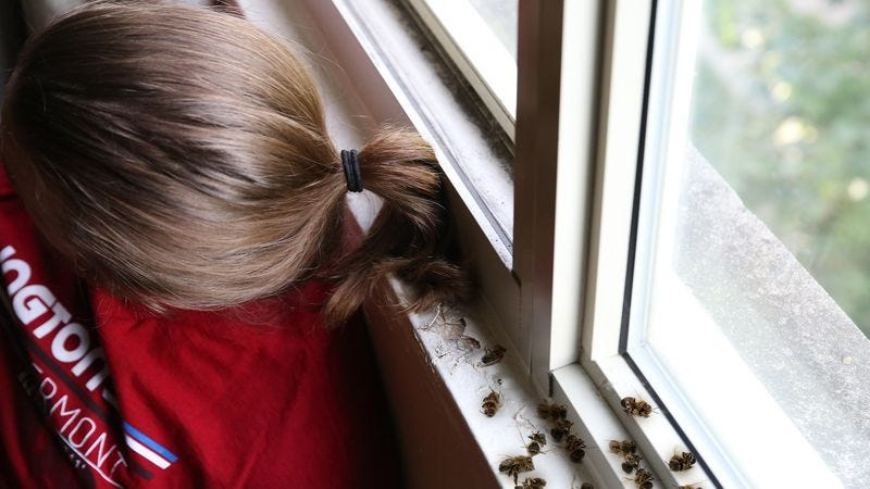 Illustration for article titled Human Rights Win! Congress Just Passed A Law That Allows Men To Use Their Ponytails To Brush Dead Bees Off Of Their Windowsills