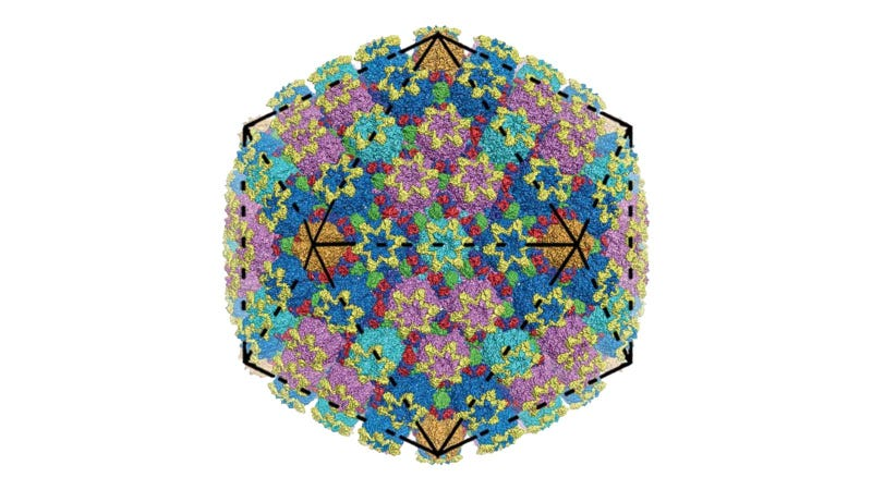 A detailed visualization of herpes simplex virus 2. Each color represents a different protein.