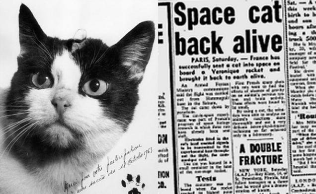 The Space Cat of 1963