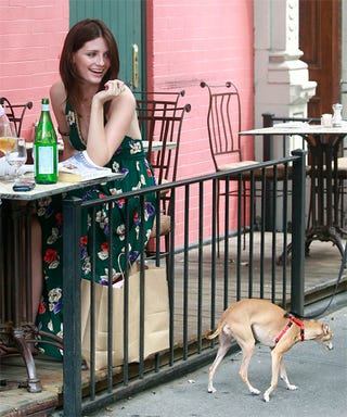 Illustration for article titled Mischa Barton Gets Cold Shoulder From Cowardly Canine