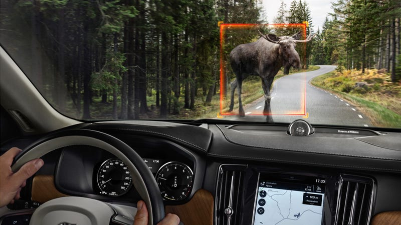 Illustration for article titled Volvo Is Adding 'Large Animal Detection' to Cars Because It's Easy to Miss a Moose?
